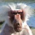 cara mono