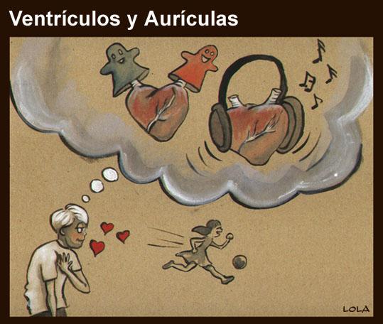 ventrículos